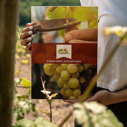 Weinpatenschaften und Weinberg-Pachten bei Dein-Weinberg.de